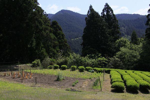 オコノ次郎が弓を射た場所。崖の先端から、登ってくる直親を射たという